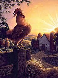 Los Mensajeros del alba (libro) Gallos