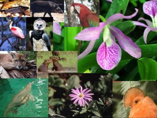 Flora_Y_Fauna