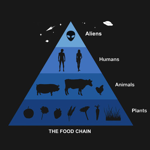 Food Chain - Cadena Alimenticia small