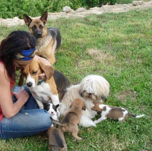 patri y perritos