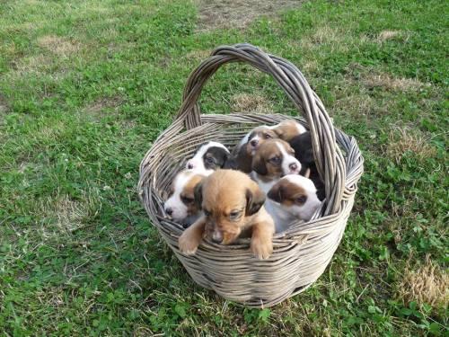 perritos todos