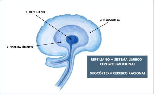 05-Los-tres-cerebros