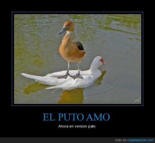 CR_107523_el_puto_amo