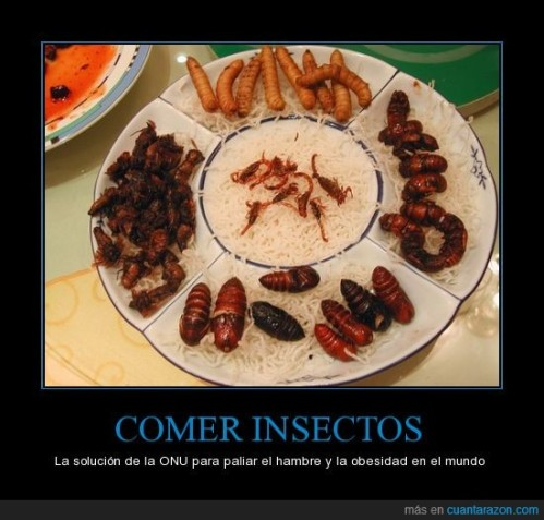 CR_827201_comer_insectos