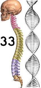 DNA33_vertebras