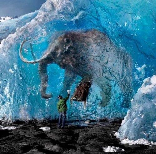 mamut congelado