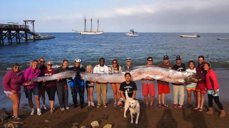 Toyon-Catalina-California-Unidos-AP_CLAIMA20131016_0139_17