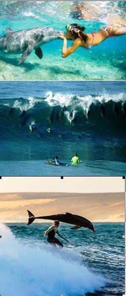 experiencias-delfines