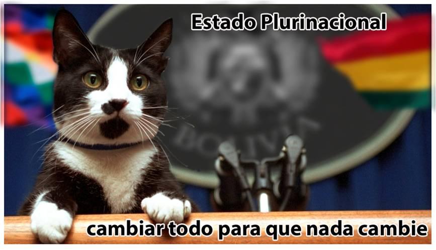 gato33