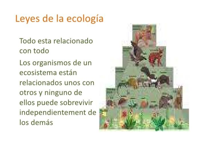 ecologa-3-728