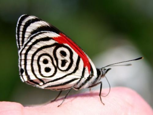 mariposa-88