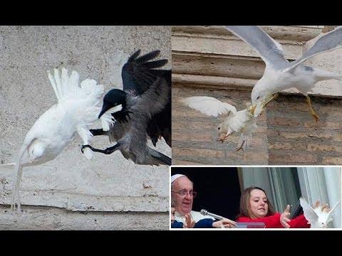 palomas-paz-atacadas