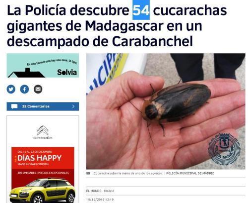 54-cucarachas-madrid