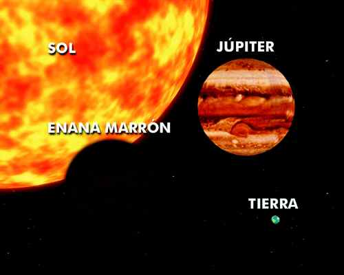 enana-marron