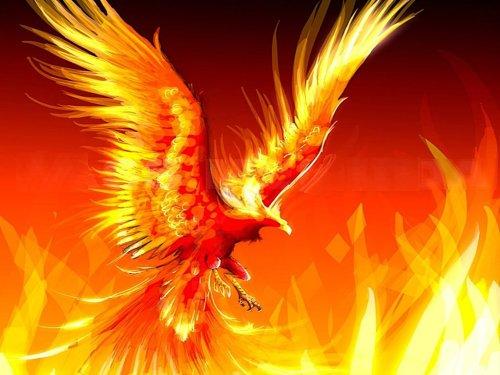gallo-de-fuego-fenix