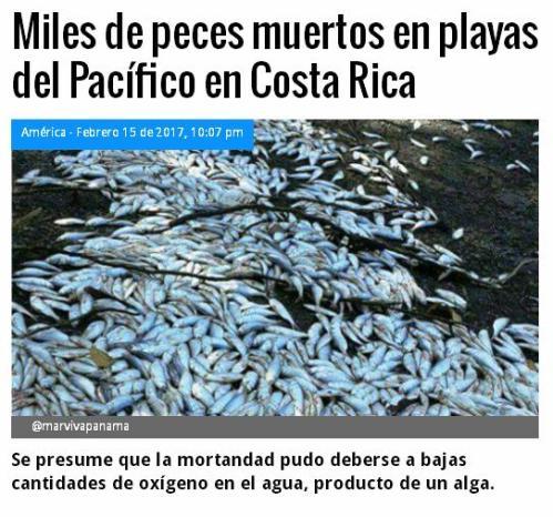 peces-muertos-costa-rica