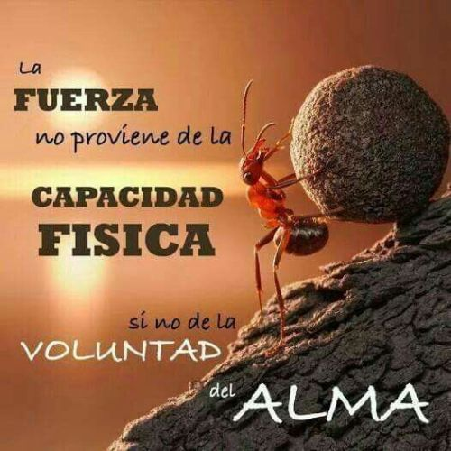 voluntad-alma